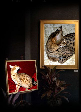Savannah cats, Florida